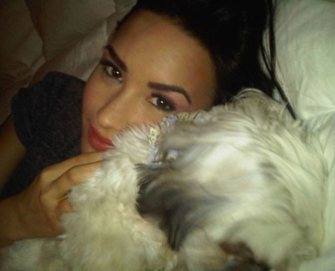 Pets often feature in #bedstagram shots, as per Demi Lovato's snap with her adorable pooch.